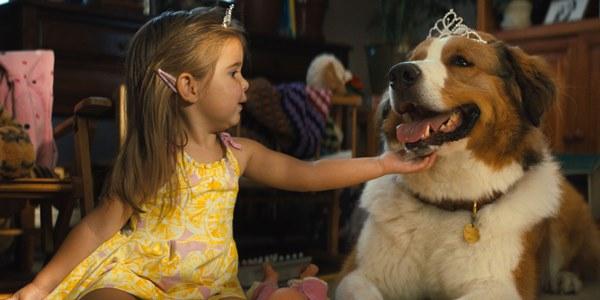читать дальше Рецензия на фильм «Собачья жизнь 2»
