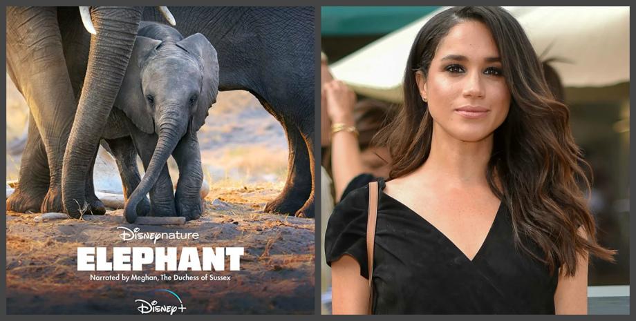 Герцогиня Сассекская озвучила «Слона»