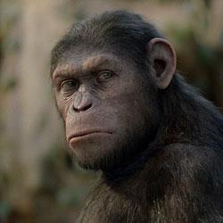 Чем продолжится «Восстание планеты обезьян»