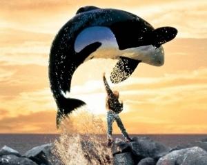 Вилли - добрый кит