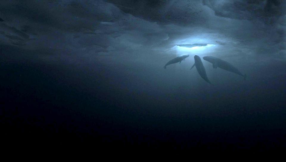 кадры из фильма Все любят китов