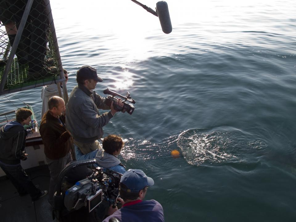 со съемок Заклинательница акул Оливье Мартинез, Хэлли Берри,