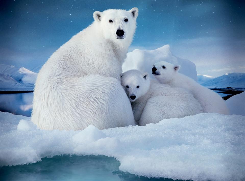 промо-слайды Арктика 3D