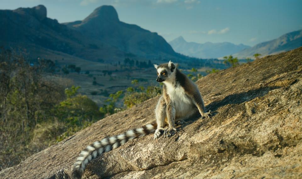кадры из фильма Остров лемуров: Мадагаскар