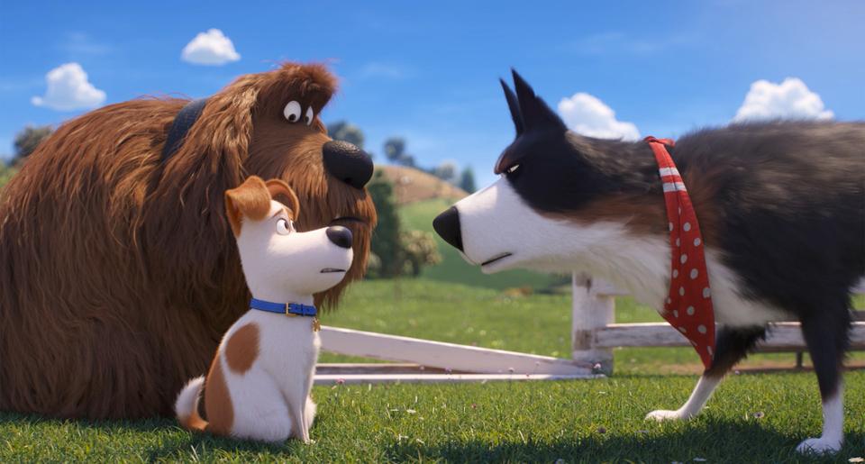 кадры из фильма Тайная жизнь домашних животных 2