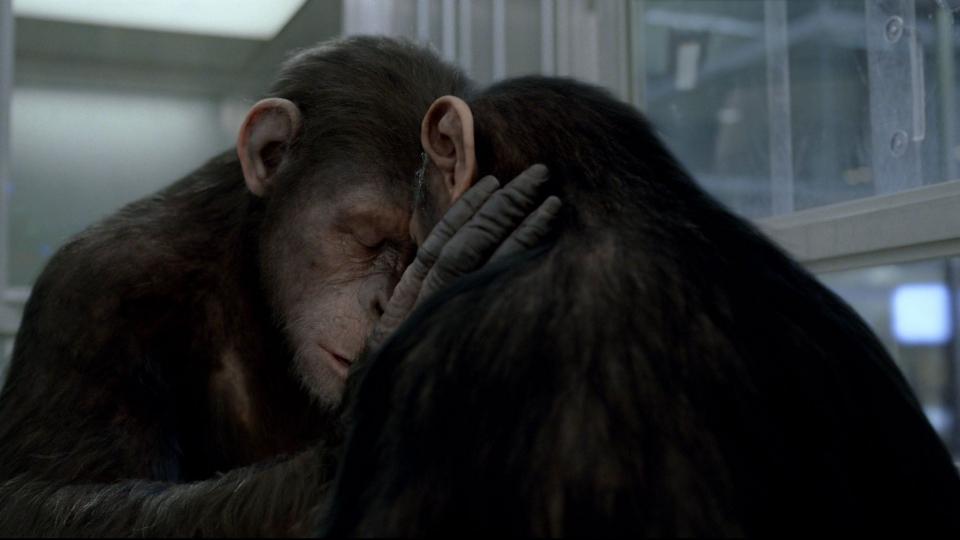 кадры из фильма Восстание планеты обезьян Энди Серкис,