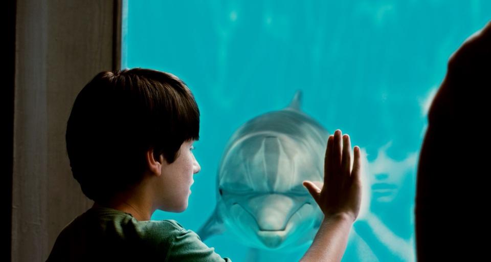 кадры из фильма История дельфина Натан Гэмбл,