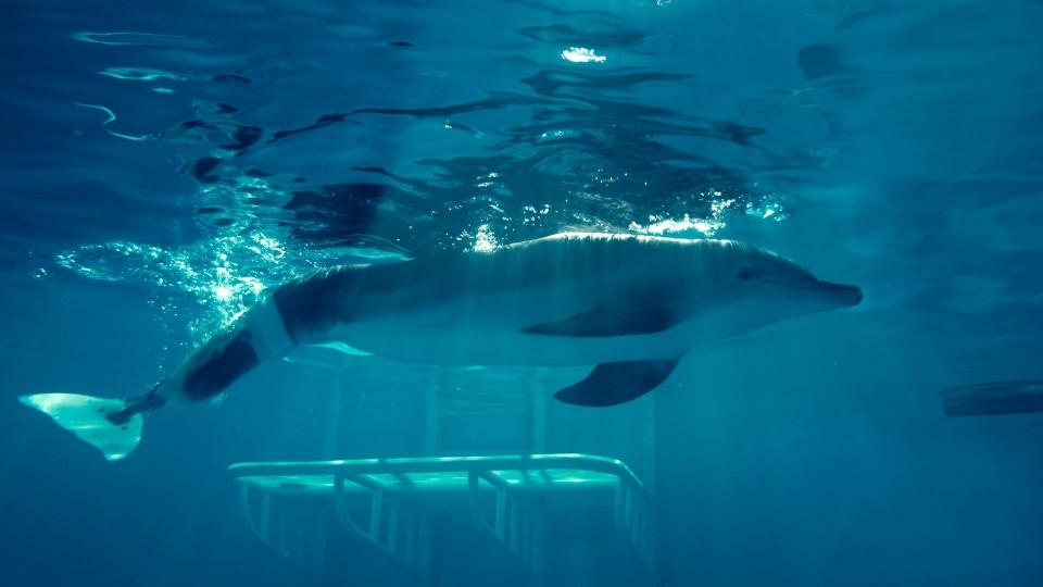 кадры из фильма История дельфина