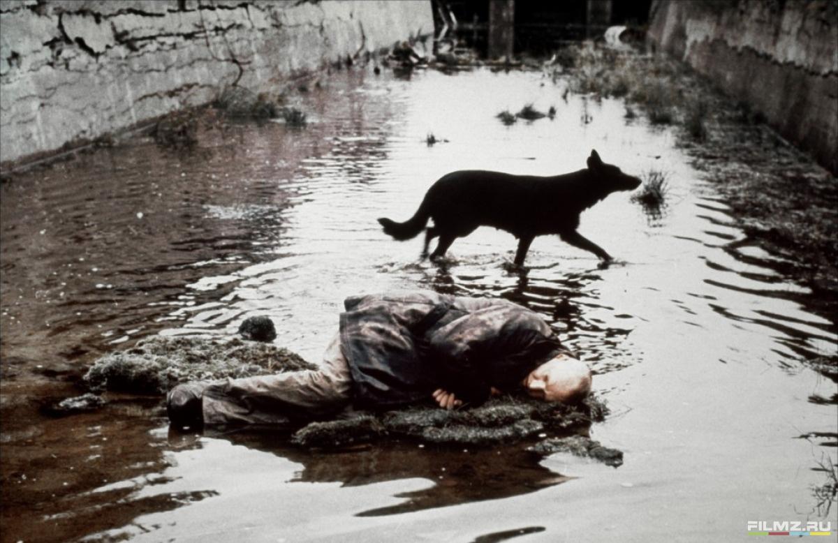 кадры из фильма Сталкер Александр Кайдановский,