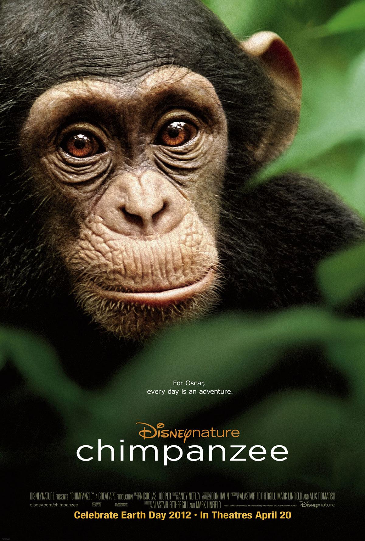 плакат фильма постер Шимпанзе*