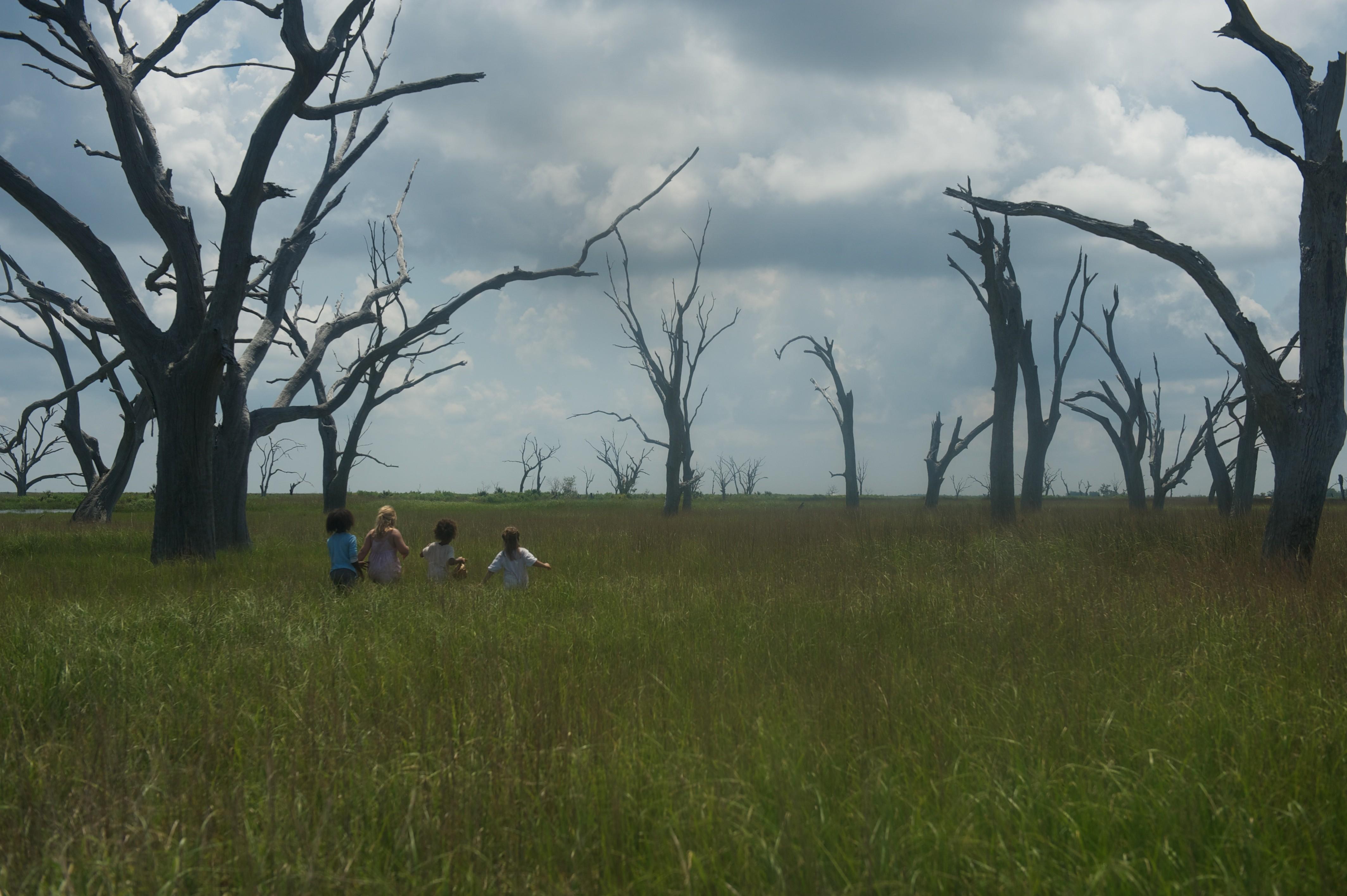 кадры из фильма Звери дикого юга