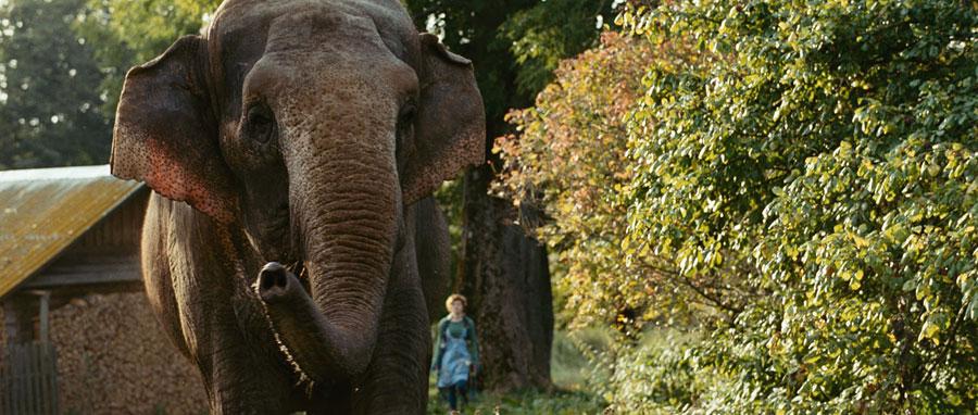 кадры из фильма Слон