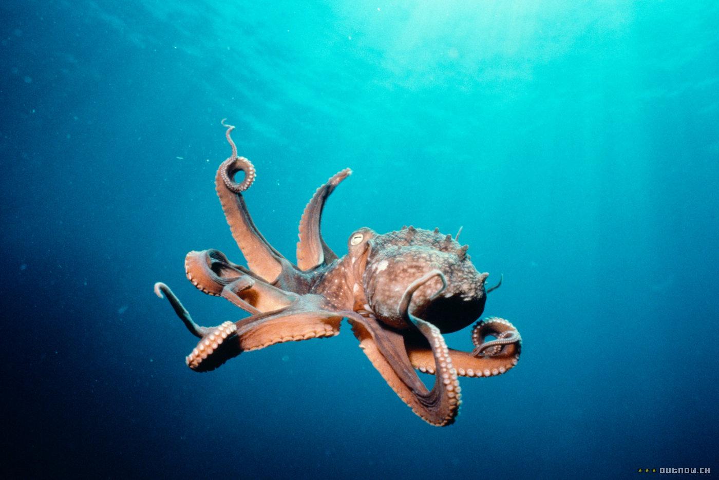 кадры из фильма Тайны подводного мира 3D