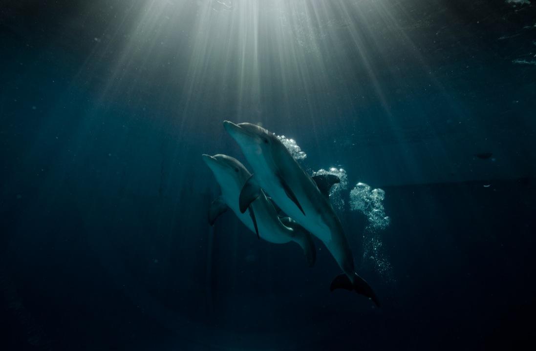 кадры из фильма История дельфина 2