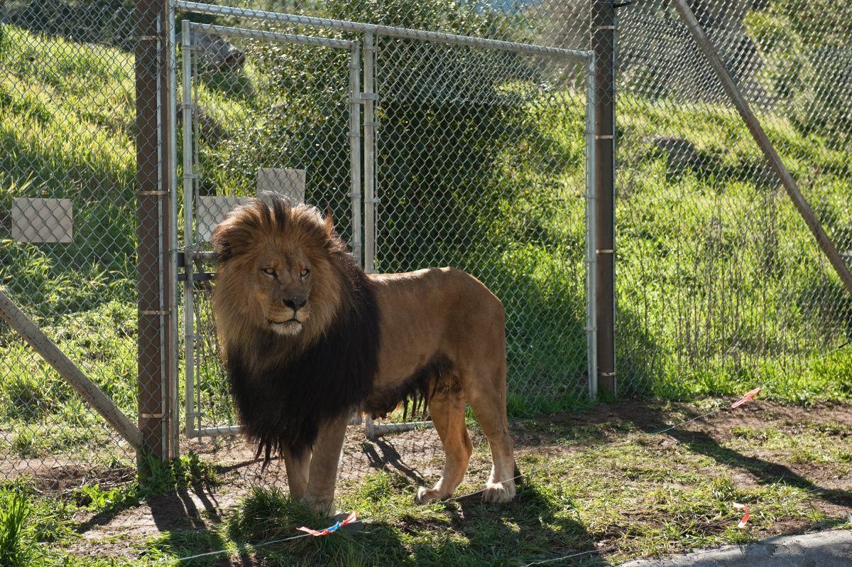 кадры из фильма Мы купили зоопарк