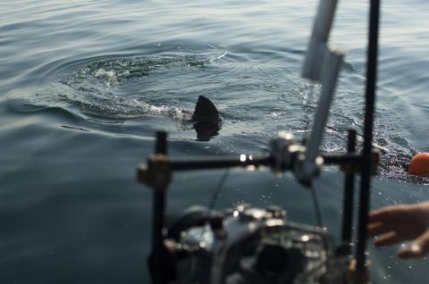 со съемок Заклинательница акул