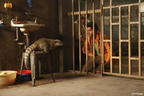 кадр №125601 из фильма Джунгли зовут! В поисках Марсупилами