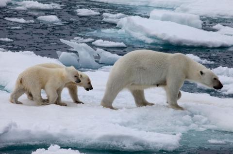 кадр №129155 из фильма Арктика 3D