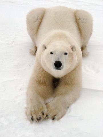 кадр №129162 из фильма Арктика 3D