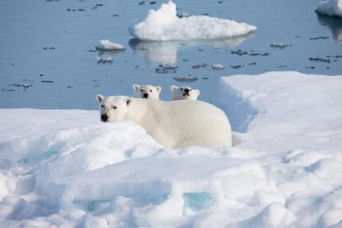 кадр №129167 из фильма Арктика 3D