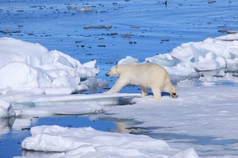 кадр №129169 из фильма Арктика 3D