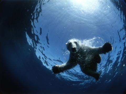 кадры из фильма Арктика 3D