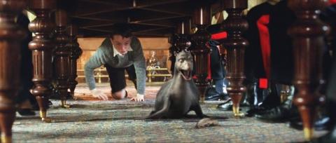 кадр №15029 из фильма Мой домашний динозавр