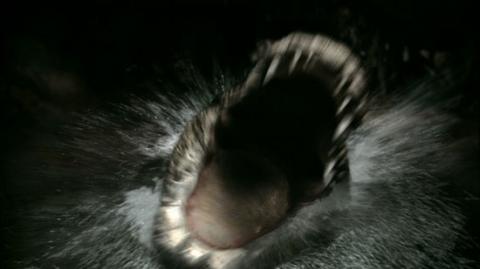 кадр №16370 из фильма Крокодил