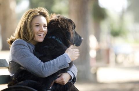 кадр №166292 из фильма Любовь к собакам обязательна