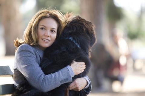 кадр №166293 из фильма Любовь к собакам обязательна