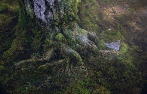 кадр №170449 из фильма Перси Джексон и море чудовищ