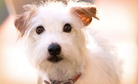 кадр №17642 из фильма Отель для собак