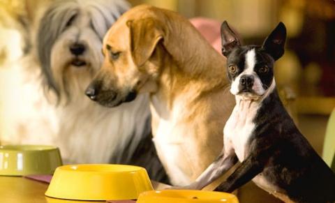 кадр №17646 из фильма Отель для собак