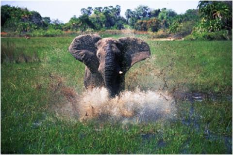 кадр №18134 из фильма Окаванго 3D: Африканское сафари