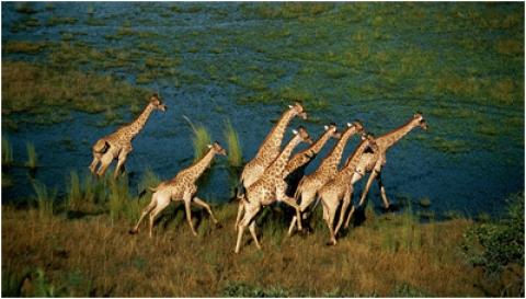кадр №18135 из фильма Окаванго 3D: Африканское сафари