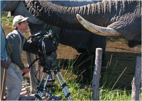 кадр №18139 из фильма Окаванго 3D: Африканское сафари