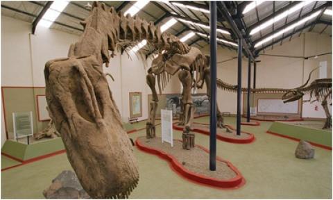 кадр №18141 из фильма Динозавры 3D: Гиганты Патагонии