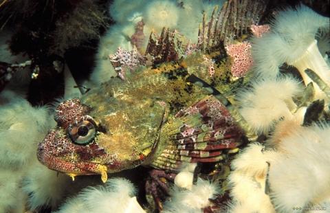 кадр №18149 из фильма Тайны подводного мира 3D
