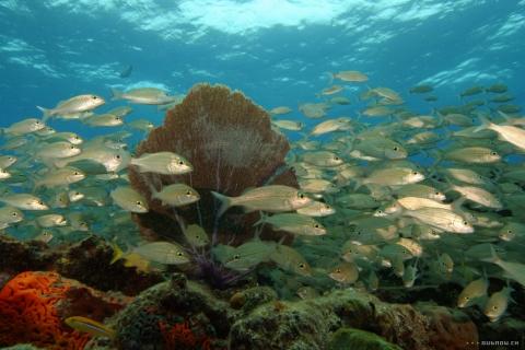 кадр №18154 из фильма Тайны подводного мира 3D