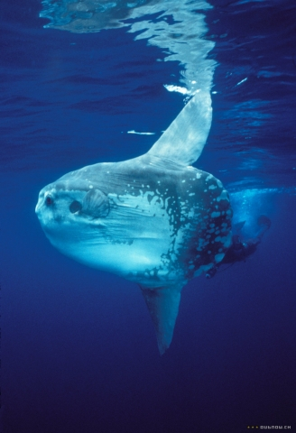 кадр №18158 из фильма Тайны подводного мира 3D