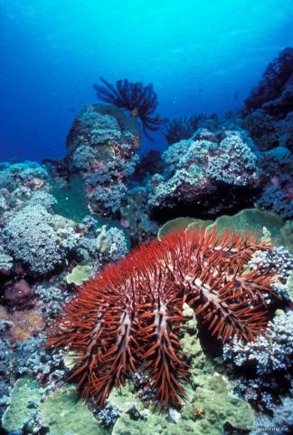 кадр №18163 из фильма Тайны подводного мира 3D