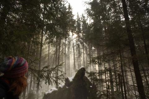 кадр №183074 из фильма Самый рыжий лис