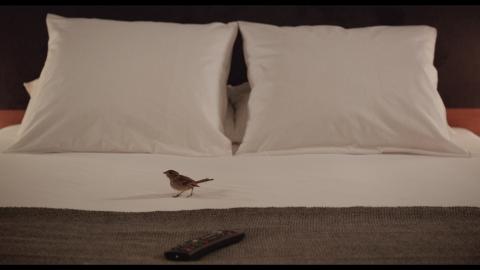 кадр №187187 из фильма Люди и птицы*