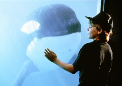 кадры из фильма Освободите Вилли 2: Новое приключение Джейсон Джеймс Рихтер,