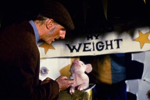 кадры из фильма Бэйб: Четвероногий малыш Джеймс Кромвелл,