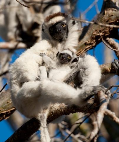 кадр №195626 из фильма Остров лемуров: Мадагаскар