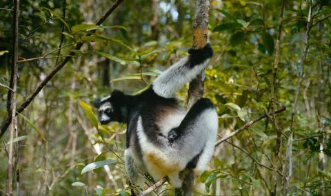 кадр №195632 из фильма Остров лемуров: Мадагаскар