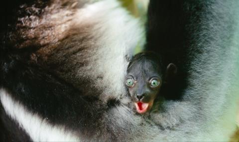 кадр №195633 из фильма Остров лемуров: Мадагаскар