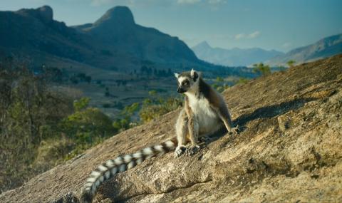 кадр №195635 из фильма Остров лемуров: Мадагаскар