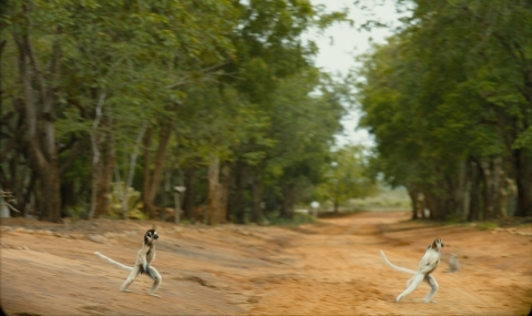 кадр №195636 из фильма Остров лемуров: Мадагаскар